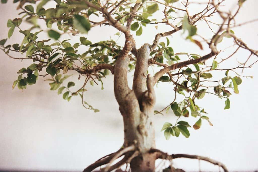 Artificial Bonsai Tree Hand: Crafted By Artisans